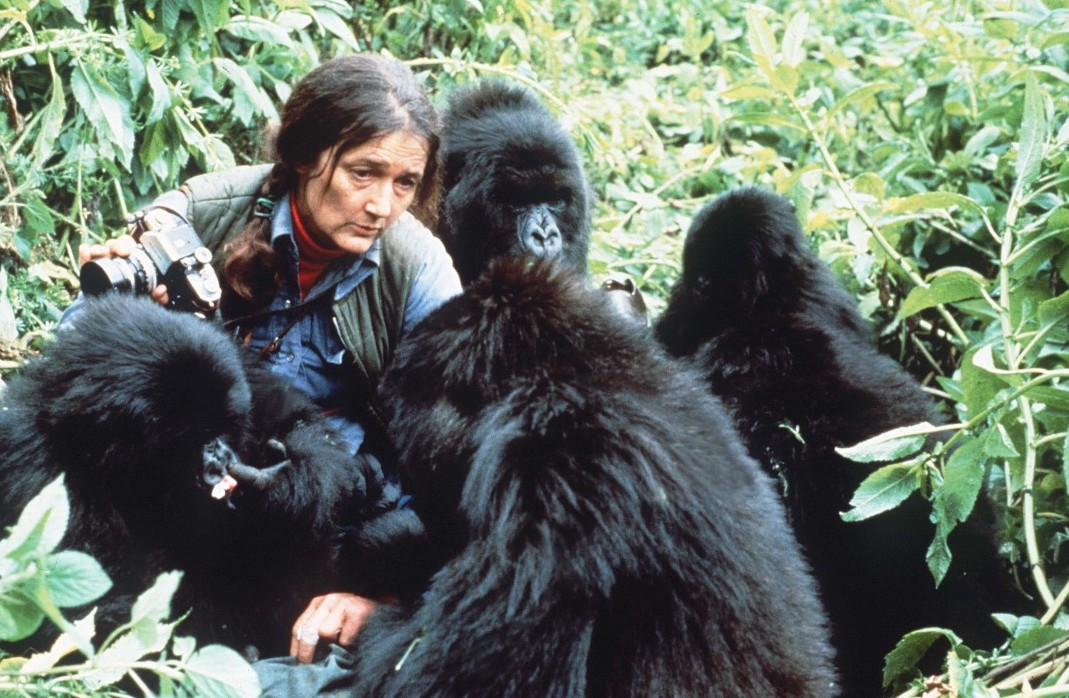 dian, fossey, gorille, protection, mort, braconnier